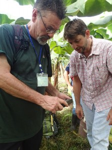 Collecting soil samples at a banana plantation